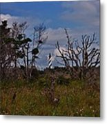Cape Hatteras Lighthouse 1 8/20 Metal Print