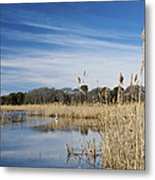 Cape May Marshes Metal Print