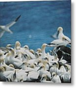 Cape St. Mary Ecological Resrve Metal Print