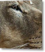 Captivating Eyes Metal Print