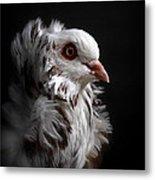 Capuchin Pigeon Metal Print