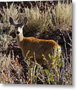 Capulon Doe Metal Print by Charles Warren