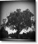 Car Parked Under A Tree Metal Print