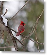 Cardinal - A Winter Bird Metal Print