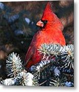 Cardinal And Evergreen Metal Print