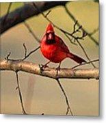 Cardinal Beauty Metal Print