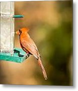 Cardinal Bird At Bird-feeder Metal Print