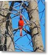 Cardinal Bird  Metal Print