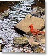 Cardinal By The Creek Metal Print