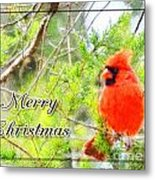Cardinal Christas Card Metal Print