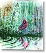 Cardinal - Featured In Comfortable Art-wildlife-and Nature Wildlife Groups Metal Print