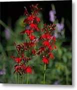 Cardinal Flowers Metal Print