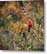 Cardinal In Autumn Metal Print