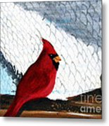 Cardinal In The Dogpound Metal Print
