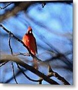 Cardinal In The Midst Metal Print