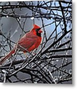 Cardinal In The Rain   Metal Print