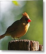 Cardinal Light Metal Print