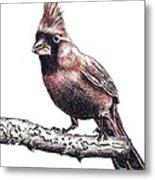 Cardinal Male Metal Print
