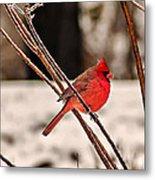 Cardinal On A Winter Day II Metal Print