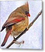 Cardinal On An Icy Twig - Digital Paint Metal Print