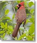 Cardinal Pictures 123 Metal Print
