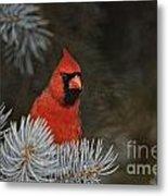 Cardinal Pictures 84 Metal Print