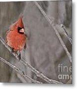 Cardinal Pictures 97 Metal Print