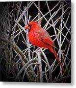 Cardinal Red With Black Metal Print