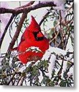 Cardinal Snowbound Metal Print