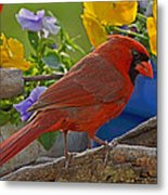 Cardinal With Pansies Metal Print