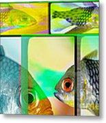 Cardinalfish Abstract Metal Print