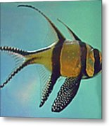 Cardinalfish Metal Print