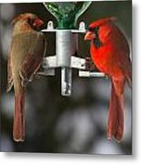 Cardinals Metal Print by John Kunze