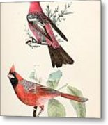 Cardinals Metal Print by Philip Ralley
