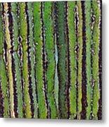 Cardon Cactus Texture. Metal Print