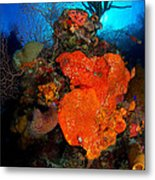 Caribbean Color Metal Print