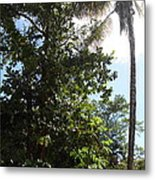 Caribbean Cruise - Dominica - 1212139 Metal Print by DC Photographer