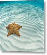 Caribbean Sea Star Metal Print