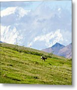 Caribou And Mount Mckinley Metal Print