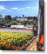 Carlsbad Flower Fields Metal Print