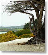 Carmel California Beach Metal Print
