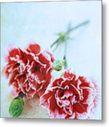 Carnations Metal Print by Stephanie Frey