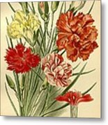 Carnations Metal Print by Philip Ralley