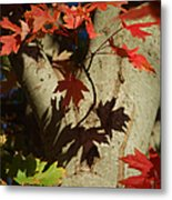 Carolina Autumn Metal Print