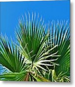 Carolina Blue Sky 8/28 Metal Print