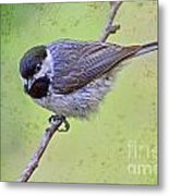 Carolina Chickadee On Angled Perch Metal Print