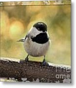 Carolina Chickadee With Decorative Frame IIi Metal Print