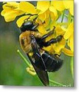 Carpenter Bee Metal Print