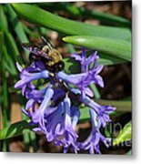 Carpenter On Hyacinth Metal Print
