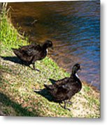 Carpenters Park-ducks Metal Print